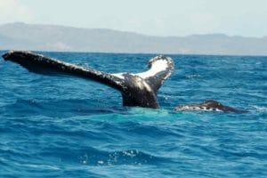 Baleines rand'eau nosy be