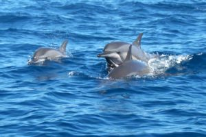 Nosy be dolphins